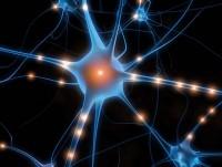 brain_cell-200x151